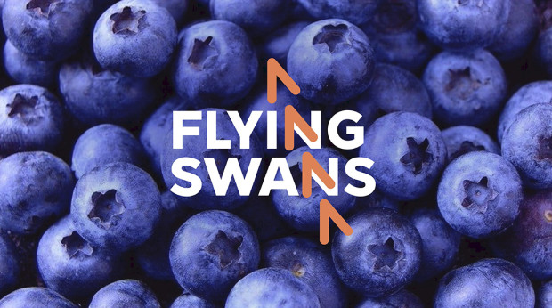 KEY-VISUAL-FLYING-SWANS-2